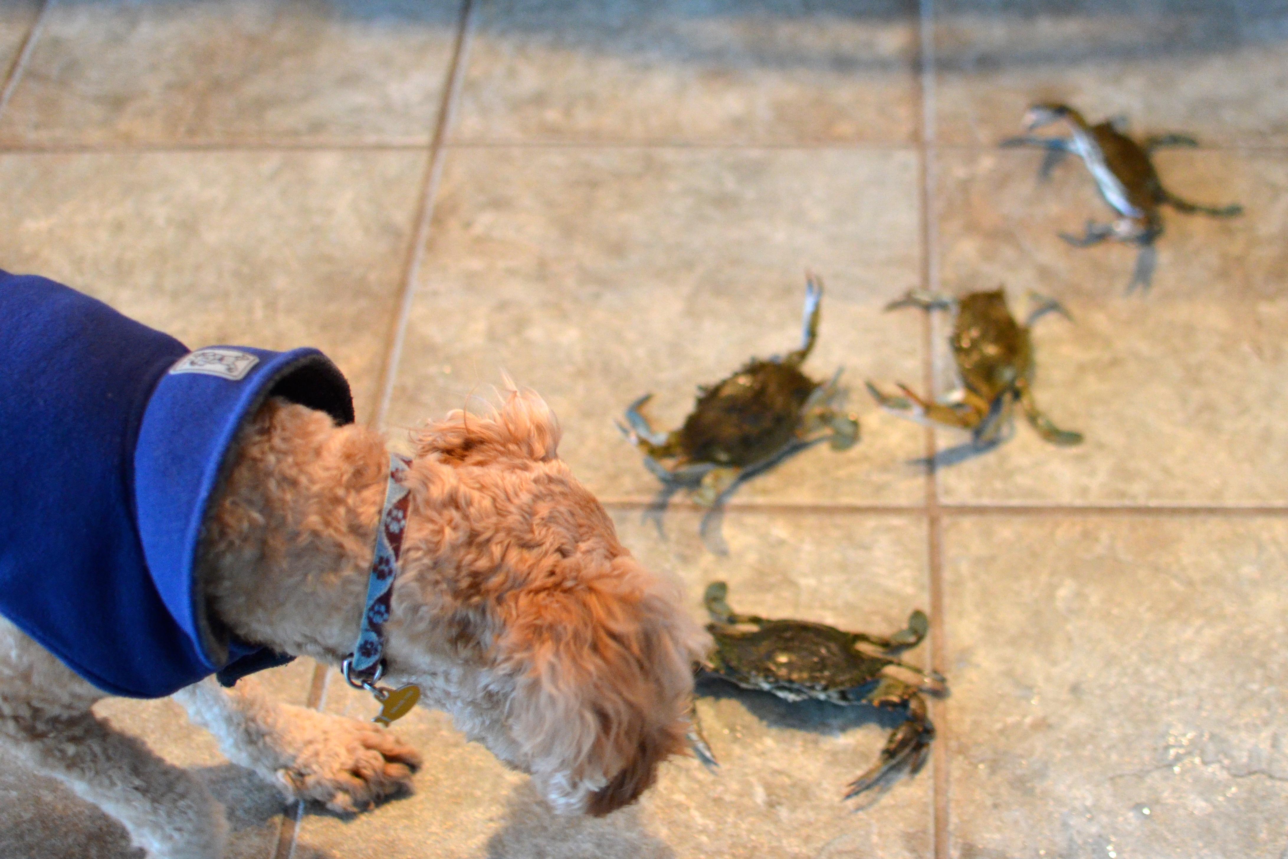Dash Crabs