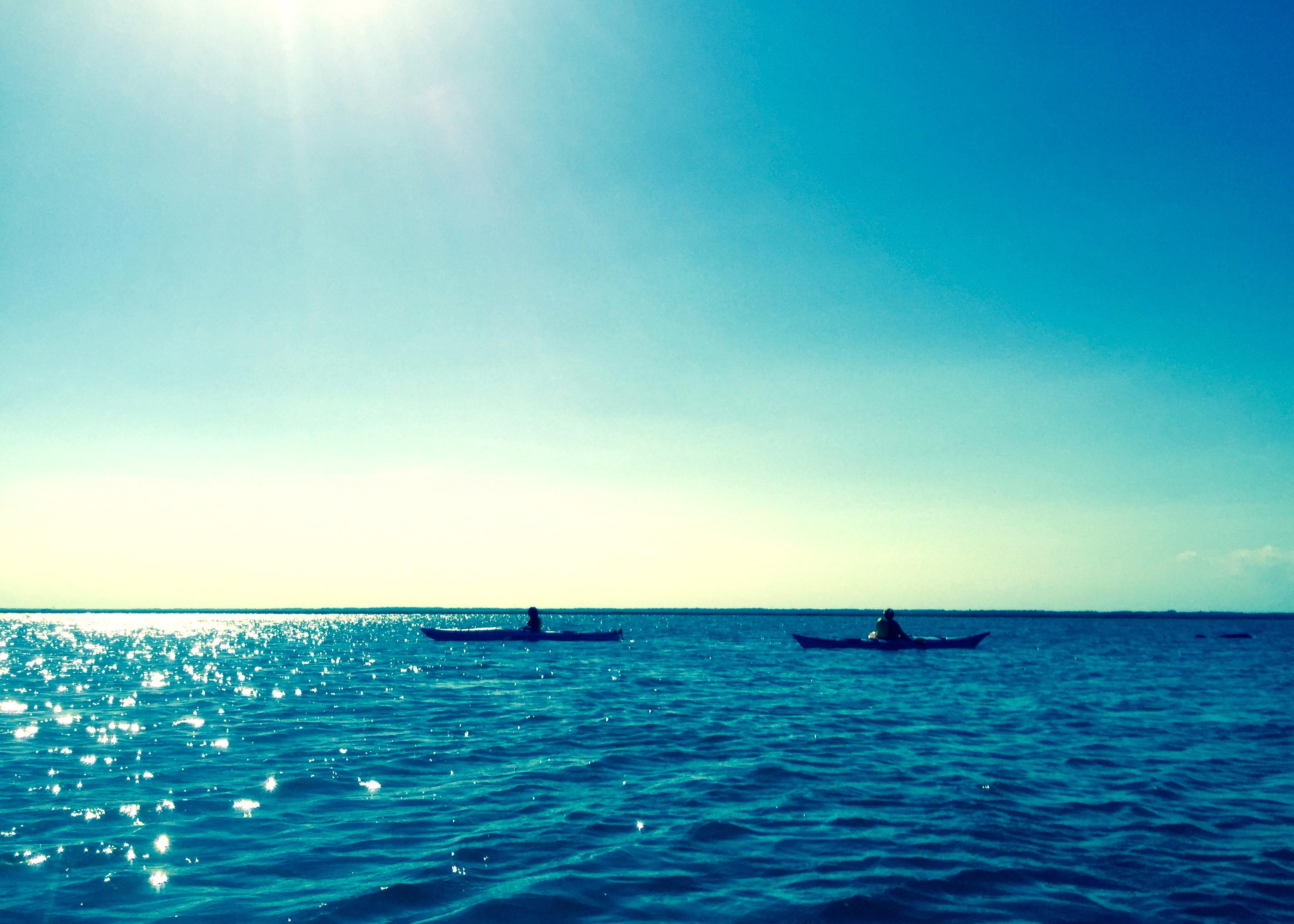 Kayak dolphins 2